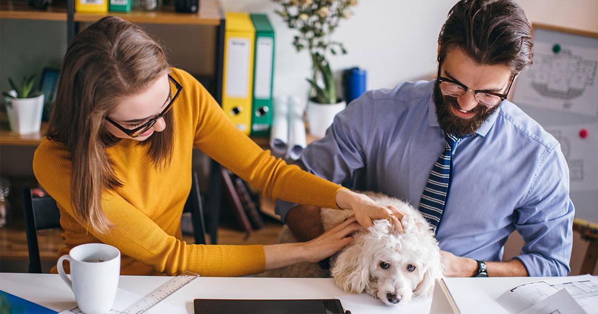 avoir un animal au travail favorise la cohésion entre salariés