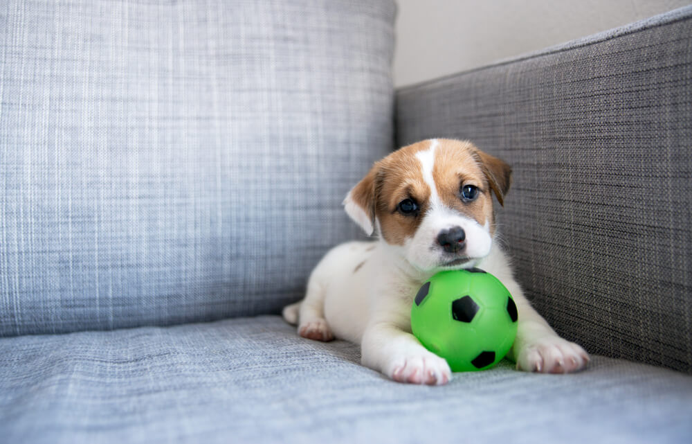 dog sitter, dog, textbook, students, summer, money, summer job, part-time job, uni, university, work