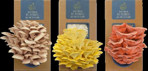 3-kits-a-champignons-pret-a-pousser
