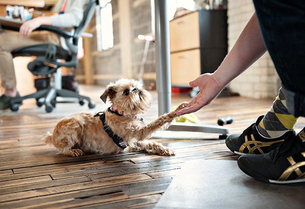avoir un animal au travail augmente la productivité