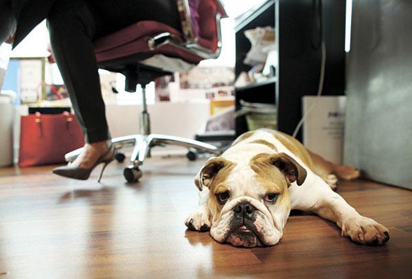 avoir un animal au travail c'est bon pour la santé
