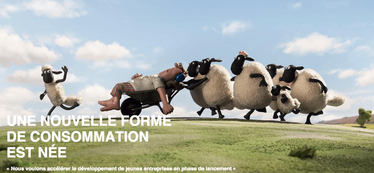sheeps mouton startup